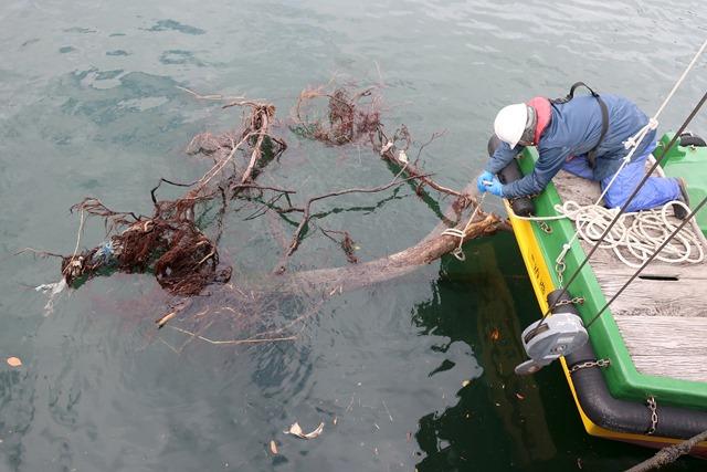 引揚作業のため流木にロープを付ける清港会職員