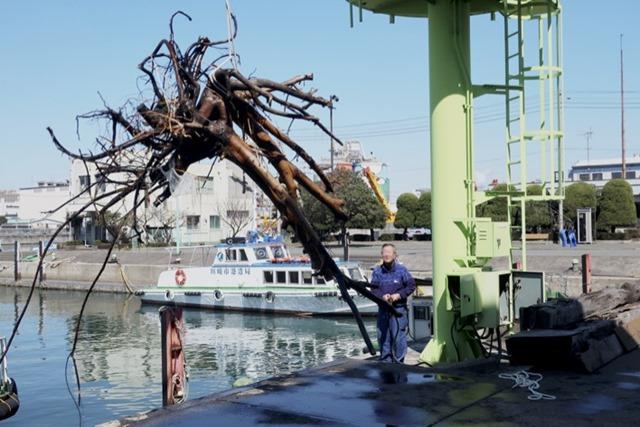 ロープを付け引き揚げられる流木