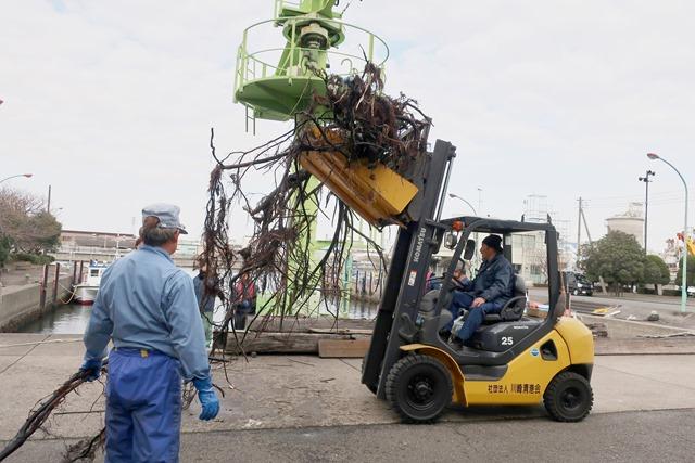 フォークリフトで流木を運搬